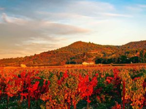 Французский виноградник