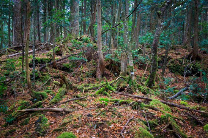 Япония, лес Аокигахара, самые страшные места на Земле