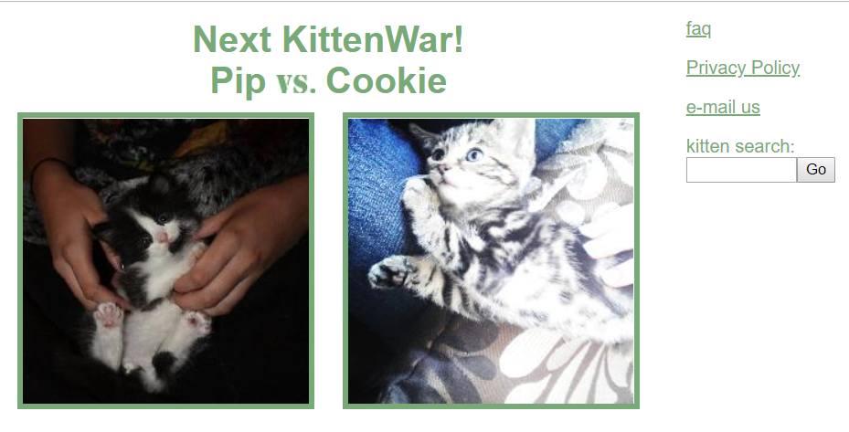 https://www.kontinuumtower.ru/wp-content/uploads/2019/06/Kitten-War.jpg